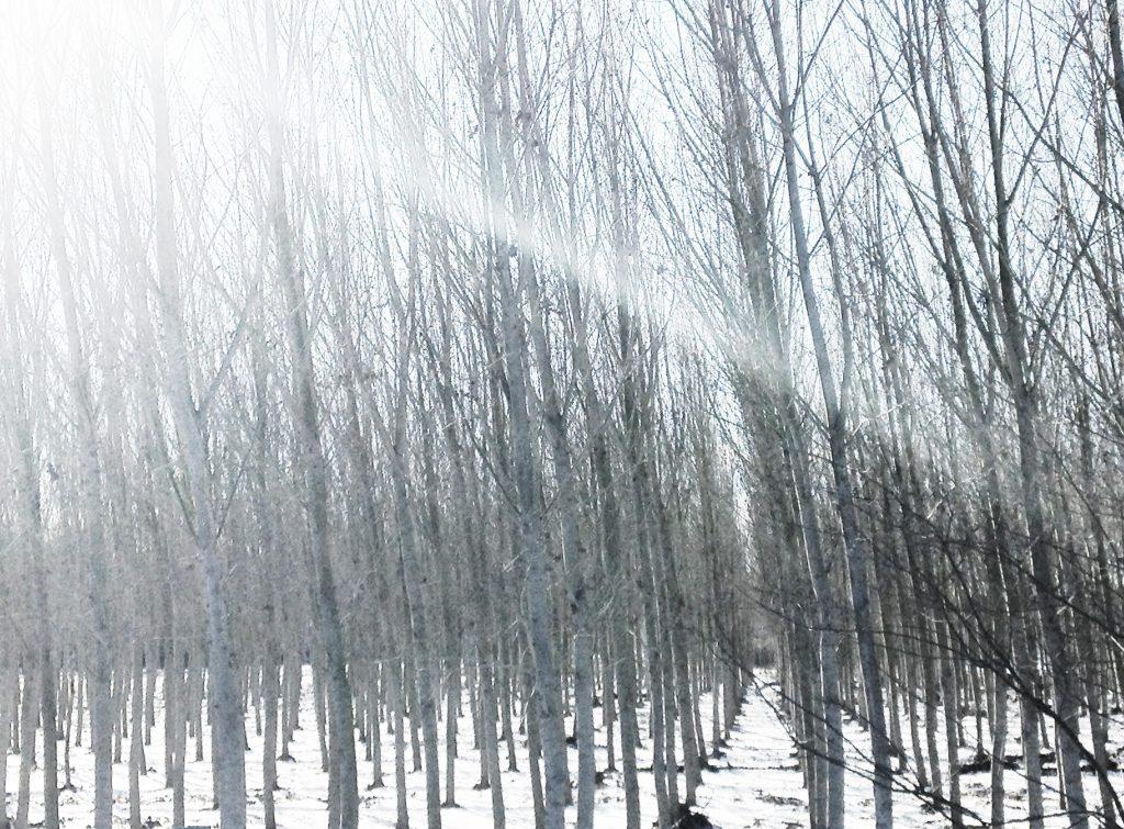 alberi d'inverno1