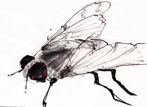 mosca 4
